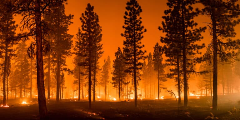 All you need to know about the wildfires in Black Hills