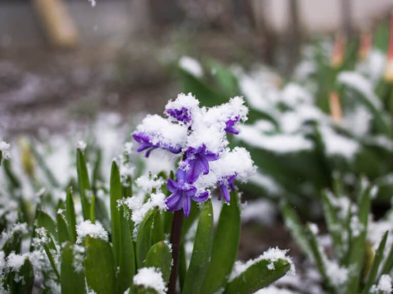 Weather Update: South Lake Tahoe May See Snow During the Week