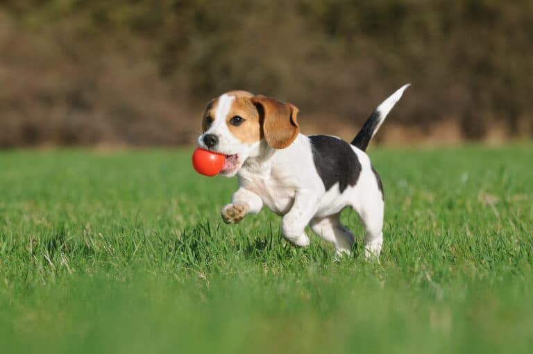 Warm Weather Essentials for Your Dog