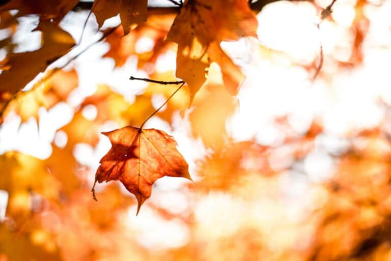 Your First Fall Forecast